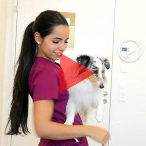 VSTPA / ASAMV - Vereinigung der schweizerischen tiermedizinischen Praxisassistentinnen - Beruf TPA